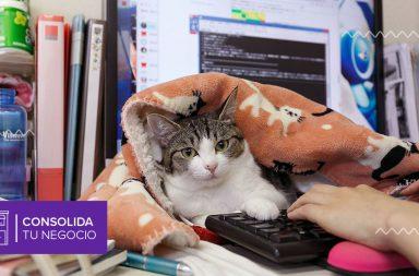 ¿Gatos en la oficina?